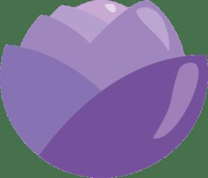 kål_kaal-plante-grøntsag