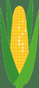 majs_corn_plante